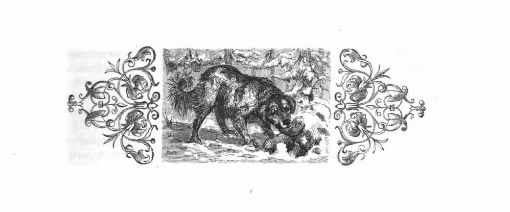 Die Einführung der Hundesteuer in der Stadt Münster