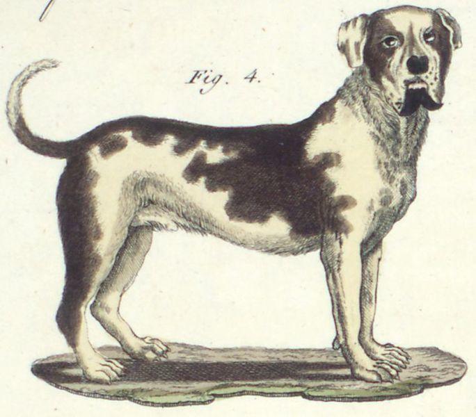Die Dogge