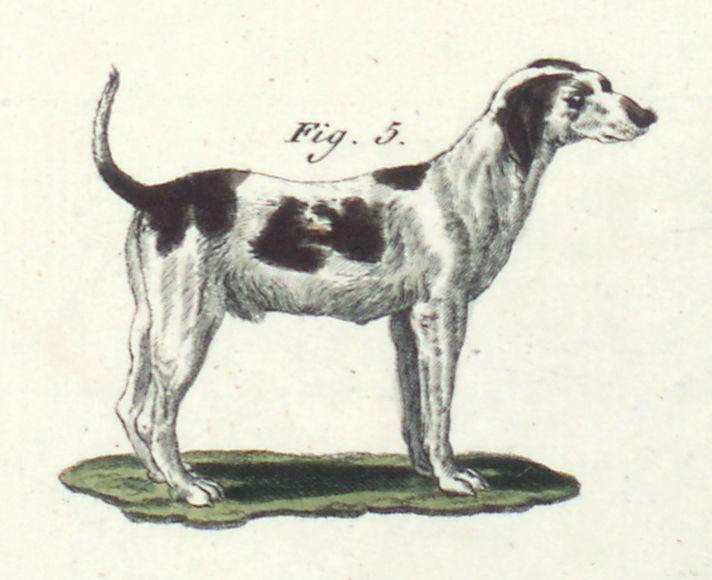 Der Hühnerhund